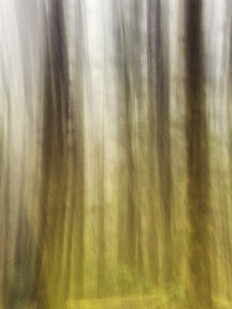 Trees by jgpittenger