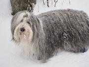 13th Feb 2021 - Snow Day!