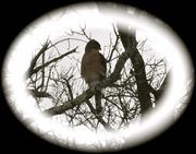 13th Feb 2021 - A hawk came by.........