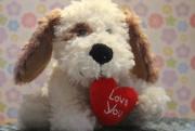 14th Feb 2021 - Puppy Love