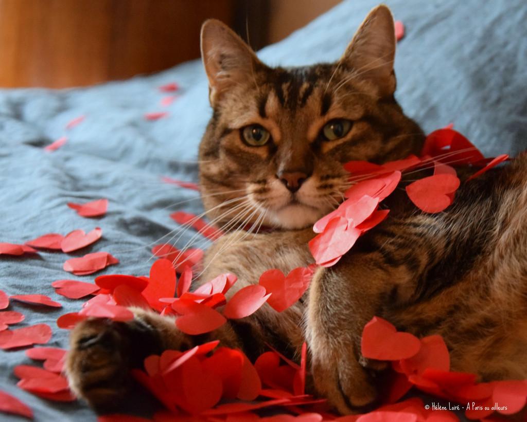 Just for fun: happy Valentine by parisouailleurs