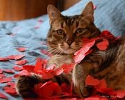 14th Feb 2021 - Just for fun: happy Valentine