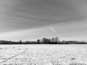 10th Feb 2021 - Black & White