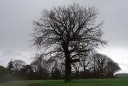 14th Feb 2021 - Tree...& chorus backdrop