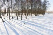 14th Feb 2021 - Snow and Shadows