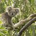 valentine surprise fun by koalagardens