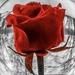 Happy Valentine's Day by mzzhope