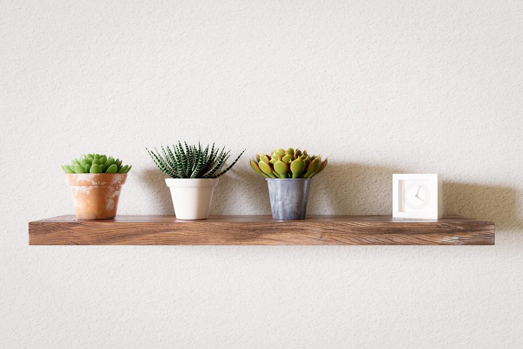 Succulents on a Shelf by humphreyhippo