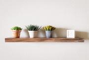 14th Feb 2021 - Succulents on a Shelf