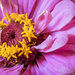 Flower Power by seacreature