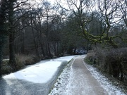 12th Feb 2021 - A very cold walk today