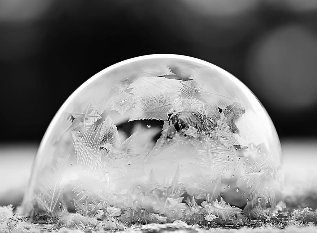 Frozen Bubble by lynne5477