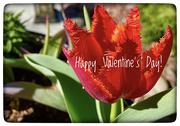 14th Feb 2021 - Happy ♥️ Day!