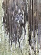 14th Feb 2021 - teardrop in the woods