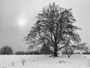 14th Feb 2021 - Tree