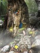 15th Feb 2021 - Rainforest fairyland