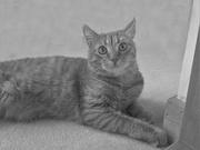 15th Feb 2021 - Portrait of a neighbourhood cat
