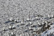 15th Feb 2021 - Ice & a sprinkle of snow