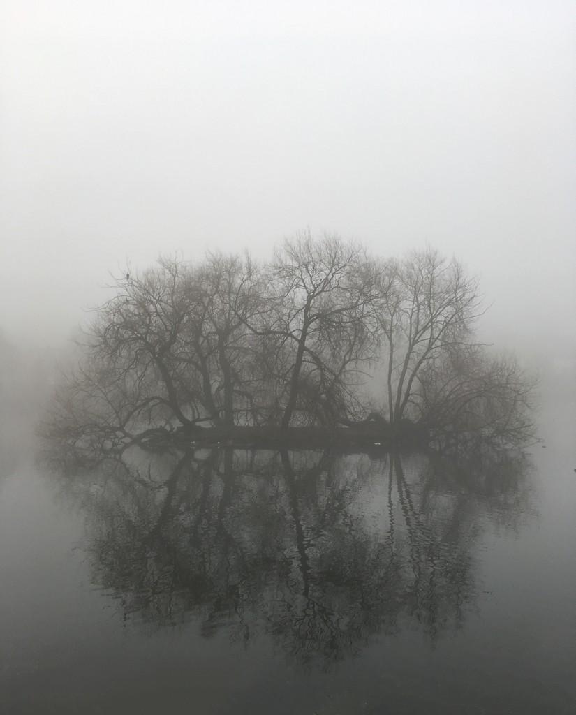 Foggy island by pattyblue