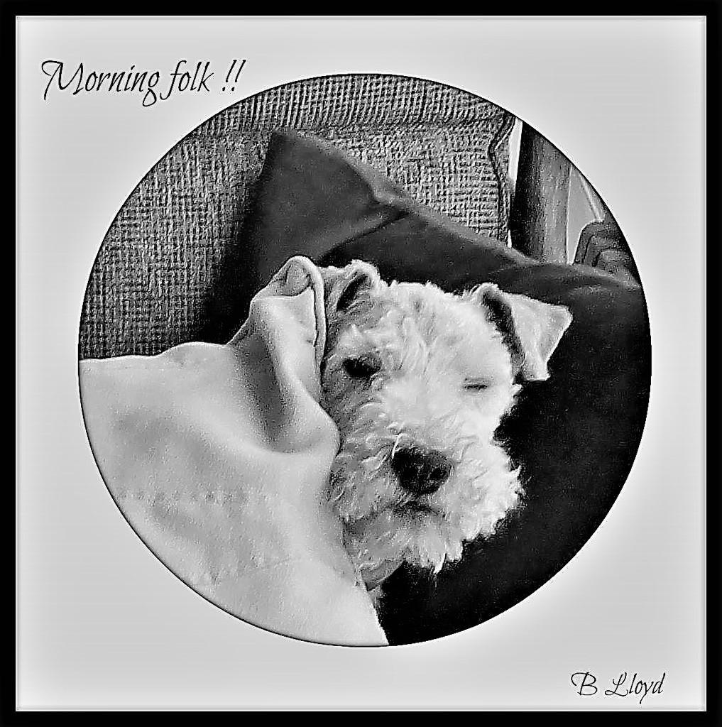 Morning folks ! by beryl