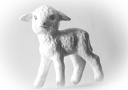 15th Feb 2021 - Portrait of a lamb