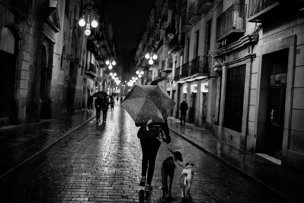 Late walk with the pets by jborrases