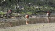 13th Feb 2021 - Splish Splash Finch Bath