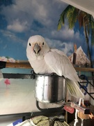 15th Feb 2021 - Blanca taking a bath!
