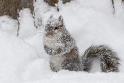 16th Feb 2021 - Do I look like a snowsquirrel?