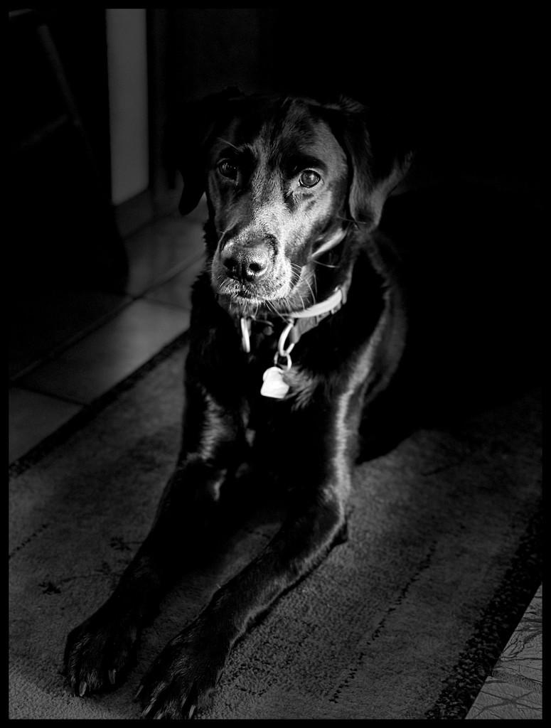 Black Pearl by jgpittenger
