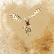 16th Feb 2021 - Owl Heart
