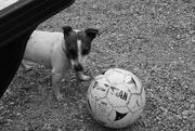 16th Feb 2021 - Pooch playing foot ball