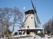 16th Feb 2021 - De Windhond
