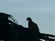 16th Feb 2021 - Bird silhouette