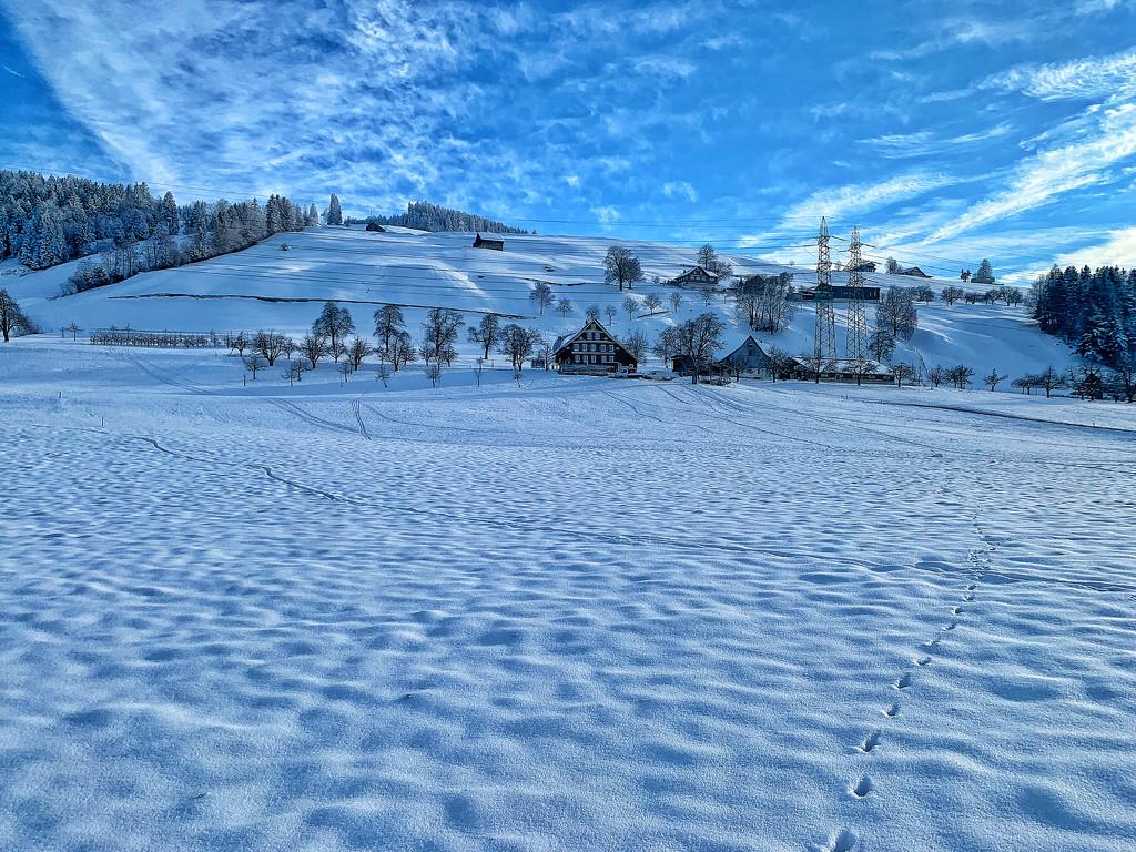 Snow.  by cocobella