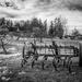 Stewart Farm by cdcook48