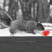 One is a Feast for a Squirrel