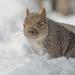 Squirrel Stink Eye