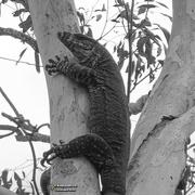 16th Feb 2021 - arboreal portraits