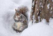 18th Feb 2021 - Please? Imploring Squirrel