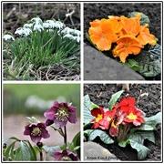17th Feb 2021 - Flowers in my garden