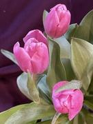 17th Feb 2021 - Valentine's Bouquet