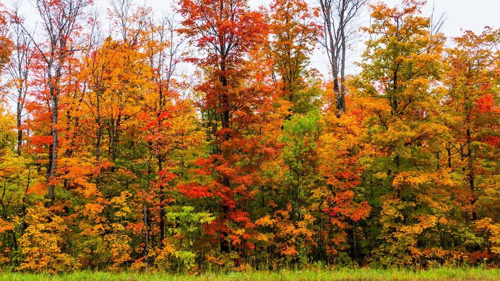 Wisconsin Fall Foliage by photograndma