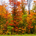 Wisconsin Fall Foliage