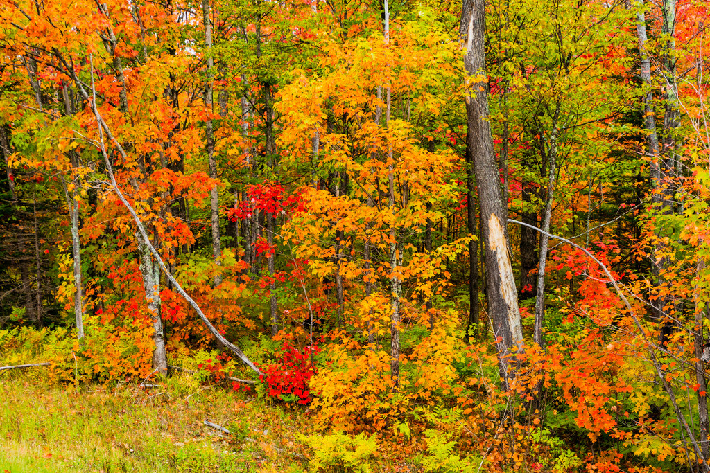 Wisconsin Colors by photograndma
