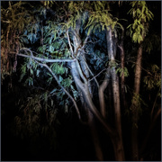18th Feb 2021 - Night, Kowhai by Torchlight