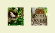 18th Feb 2021 - Owls..