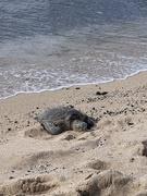 17th Feb 2021 - Lazing on the sand at Kukio beach