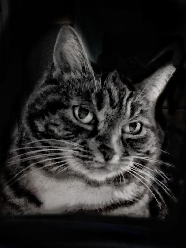 The Lodger Cat by 30pics4jackiesdiamond