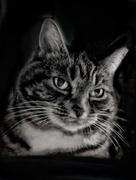 18th Feb 2021 - The Lodger Cat